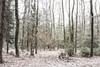 Fading away (Petr Sýkora) Tags: les sníh zima nature forest fade trees winter light czech