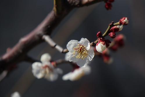 早春の匂い