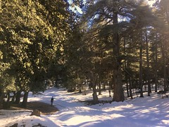IMG_9769 (anisaheawad) Tags: morocco travel traveling nature digital ifrane