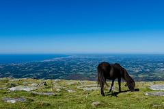 """At the top of """"Le col de la Rhune"""" (Joseph Trojani) Tags: montagne mountain pyrenees cairn roc sky beautiful ciel falaise blue bleue landscape paysage nikon d7000 rhune pottok cheval poney horse paysbasque"""