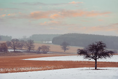 Wasted Sunsets.. (u c c r o w) Tags: tree snow snowy oettingen bayern germany uccrow field landscape crop winter clouds europe nature bavaria forest
