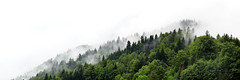 Con la edad, las montañas. (Herminio.) Tags: montaña mountain alps alpes alpen bosc bosque forret frog rain mist niebla lluvia verano