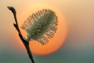 *Spring Sunset*