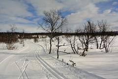 skispor (KvikneFoto) Tags: snø snow winter vinter norge hedmark kvikne nikon1j2 landskap