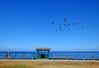 La Jolla Cove in San Diego, California (` Toshio ') Tags: toshio sandiego lajollacove lajolla california pelicans fence runner woman bird pacific ocean sea