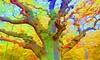 DSCI2870b (wos---art) Tags: bildschichten baum stamm ast äste entlaubt wald lichtung wuchs