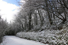 La carretera principal y los árboles, tupidos (5diegoarias) Tags: nieve asturias