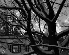 Night skiing magic (bd168) Tags: blackandwhite monochrome hiver neige lumières lights winter fujifilm 90mm xt10 house maisons ski