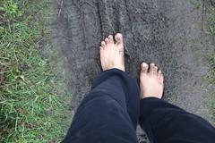 IMG_1236 (bfe2012) Tags: barefoot barefeet barefooting barefooted barefooter barefoothiking barefootlifestyle feet dirtyfeet toughsoles