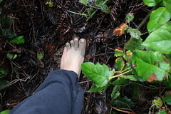 IMG_1266 (bfe2012) Tags: barefoot barefeet barefooting barefooted barefooter barefoothiking barefootlifestyle feet dirtyfeet toughsoles