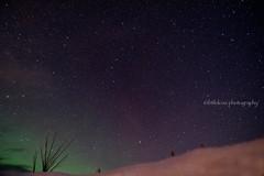 Northernlights 3 (littlekiss☆) Tags: northernlights aurora nightscape nightsky nightview star whitehorse yukon littlekissphotography landscape