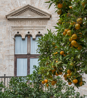 Orange trees and old buildings