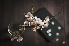 Ephemeral flowers (Ramón Antiñolo) Tags: almond tree flower blossom spring vintage cottage lifestile still life blooming low key