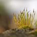 Moss in winter