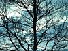 Morning Veins (Robert Cowlishaw (Mertonian)) Tags: dawn sky gothic morningviens canon powershot g1x mark iii canonpowershotg1xmarkiii mertonian robertcowlishaw melancholy light dark winter febraury