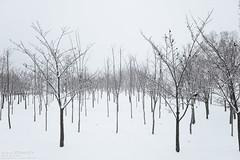 Winter tree (Dreamy Camera Photography) Tags: winter 겨울 겨울나무 wintertree dreamycameracafe snow tree