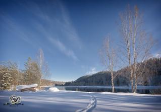 swedish winter landscape with moose tracks