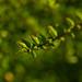 Boxtree branch