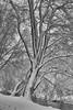 Buche (efgepe) Tags: 2017 70mm dezember schnee buche snow baum tree nordkanal bw sw lightroom silverefexpro nik schwarzweiss schwarzundweiss neuss stadtwald