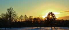 Winter Sunset. (Eddie Crutchley) Tags: europe england cheshire outdoor nature beauty simplysuperb sunlight sunset silhouette shadows trees greatphotographers wonderful