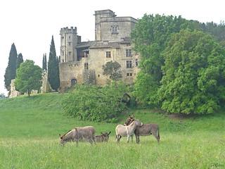 Les anes du chateau