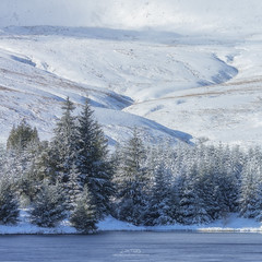Winter Firs (AMBIENTLIGHT.PHOTOGRAPHY) Tags: cantrefreservoir breconbeacons southwales wales uk britain landscape winter snow firtrees pinetrees lake trees