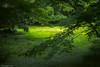Rakujyuen park (fushiana) Tags: mishima japan dp3 merrill