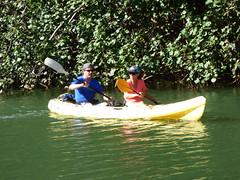 Wailua River State Park - Fern Grotto (85) (pensivelaw1) Tags: hawaii kauai wailuariverstatepark ferngrotto