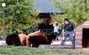 08a Rapid City SD - Bear Country USA 35 (Johns Never Home) Tags: utah wyoming idaho montana southdakota yellowstone tetons badlands mountrushmore crazyhorse devilstower rapidcity powwow saltlakecity jacksonhole