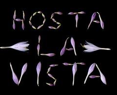 58664.01 Hosta (horticultural art) Tags: horticulturalart hosta flowers buds wordart humor