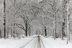 Houtkampweg (doevos) Tags: bos gelderland hogeveluwe houtkampweg npdhv nationaalparkdehogeveluwe nederland netherlands sneeuw veluwe winter forest neige snow woud