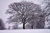 Snow 2017 (tim ellis) Tags: snow suttonpark tree birmingham uk