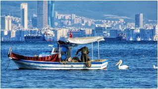 The fishing boat at Izmir with pelicans.