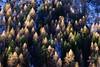 Il popolo degli gnomi (stefano.chiarato) Tags: gnomi abeti larici bosco wood valtaratano natura lombardia italy inverno winter pentaxart pentax pentaxlife pentaxk70