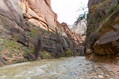 Au bout du chemin avant les Narrows (Seb & Jen) Tags: zion national park utah usa canyon north fork virgin river narrows