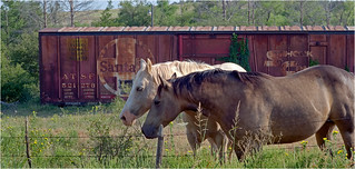 Freight car horse shed, Double Mountain, Texas