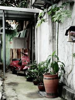 Houseplant and Vespa