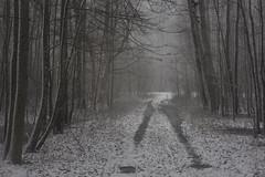 winter is escape IX (Mindaugas Buivydas) Tags: lietuva lithuania color winter december snow snowstorm blizzard mood moody tree trees forest delta nemunasdelta nemunodeltosregioninisparkas nemunasdeltaregionalpark favoriteplaces memelland šilininkai mindaugasbuivydas