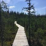 Boardwalk, Boundary Bog Trail, Prince Albert National Park thumbnail