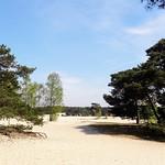 Soester Duinen, Soest, Netherlands - 4902 thumbnail