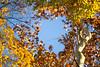 bosco buri 6 (formicacreativa) Tags: autumn autunno fiumeadige adige fiume boscoburi villaburi verona portosanpancrazio alberi albero prato erba parco campo cielo foresta foschia paesaggio acqua