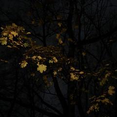 TERRA INCOGNITA (Grant Simon Rogers) Tags: grantsimonrogers ƒ artistphotographer artist leica leicaq leicaflasher leicasf40flash sooc straightoutofthecamera daylightwithflash dayfornight flashing flasher picturemakingnottaking thefirst10000 themanwhoflashedattrees terraincognita darkbusiness