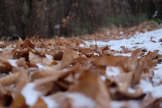 Carpet of leaves on a day of ice