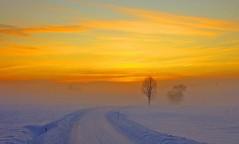 Wintermood (salsellen) Tags: norway norge romerike sunset sky orange himmel vinter tre landskap landscape nature natur