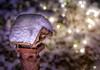 Home sweet home (Mira mella) Tags: macro macromondays favorite theme year snow bokeh winter