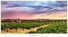 Seppeltsfeild Rain Sunset (David Dahlenburg) Tags: nik barossa sunset southaustralia sa australia wwwdaviddahlenburgcom dahlenburg vineyard seppelt seppeltsfield panorama landscape clouds colour stormy