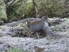 Water Rail at Wigan Flashes. (stevencarruthers93) Tags: wigan wildlife nature wiganflashes greenheart photography winter winterwatch