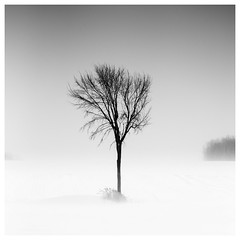 _DSC3629-Mr (gillesporlier) Tags: hiver winter noiretblanc blackandwhite nikon d750 tree snow