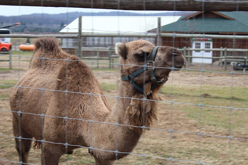 Lewis Farms and Petting Zoo