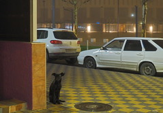 You are a kind man? A morning meeting (vorotnik1) Tags: street photo dog meeting life animals
